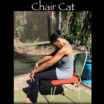 garden chair cat