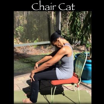 garden chair cat